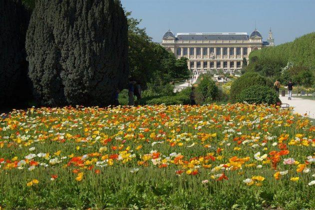 jardin-plantes9