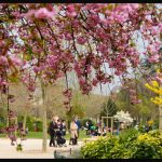france_paris_spring