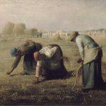 Сборщицы колосьев
