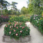 Цветы в Венсенском парке